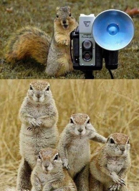 familia-ardillas