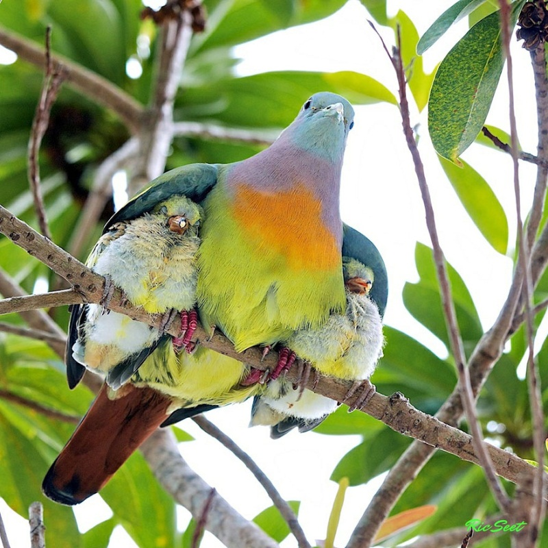 familia-aves