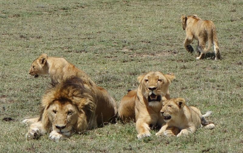 familia-leones