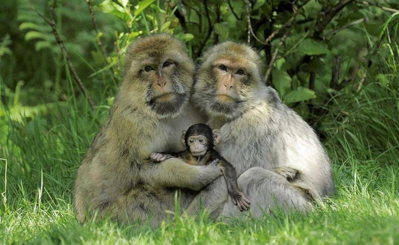 familia-macacos