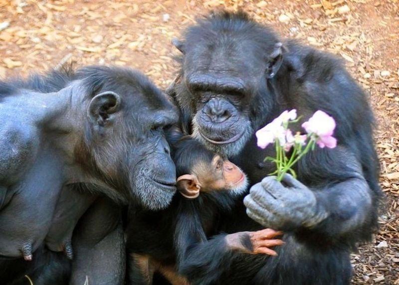 familia-monos