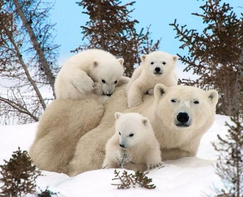 familia-osos