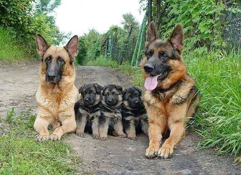 familia-pastor