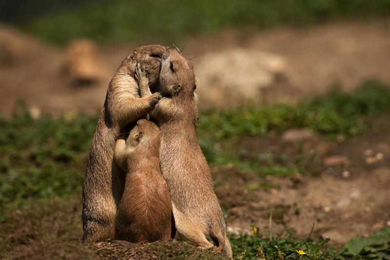 familia-suricatas2