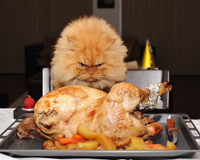 garfi-gato-enfadado1