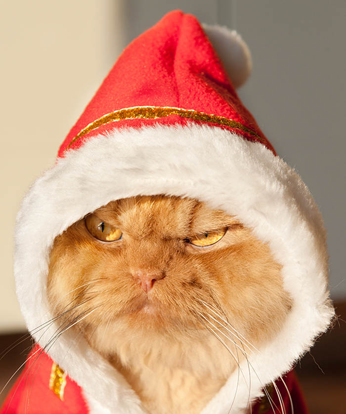 garfi-gato-enfadado10