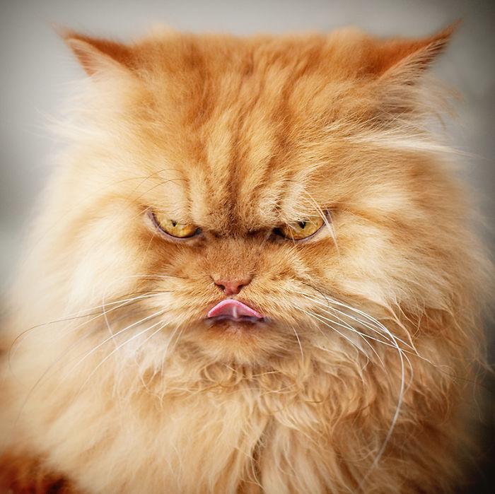 garfi-gato-enfadado12