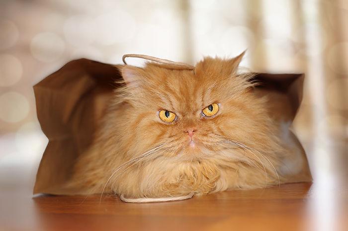 garfi-gato-enfadado17