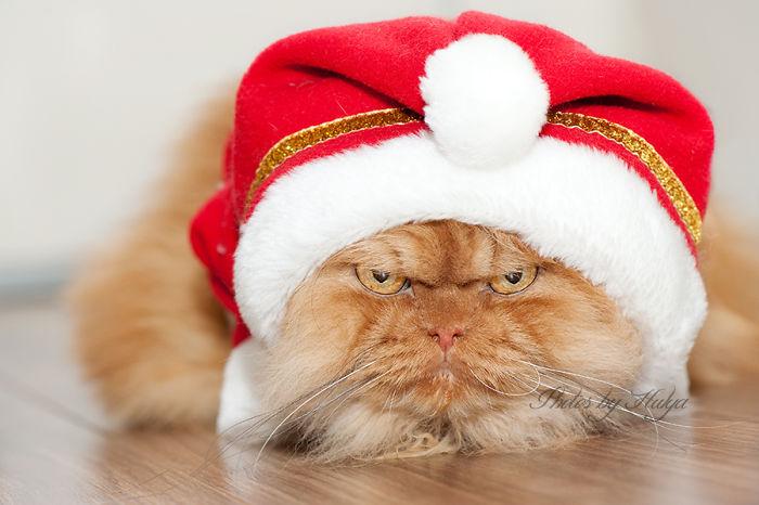 garfi-gato-enfadado19