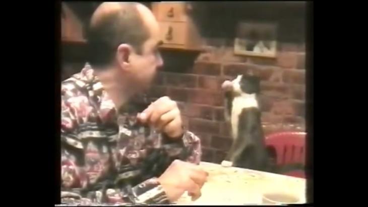 gato-lenguaje