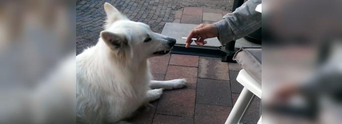 perro-anti-tabaco