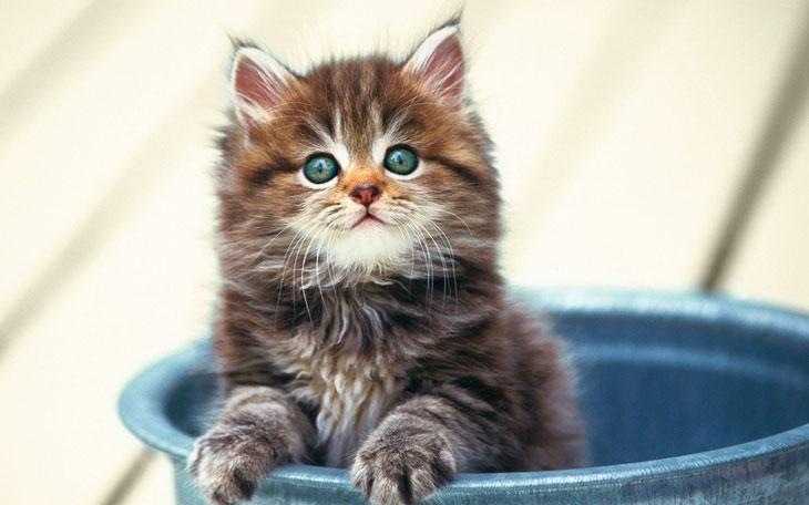 gato-cool