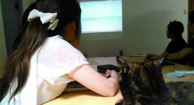 gato-oficina