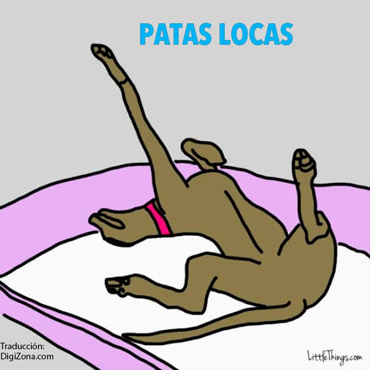 posiciones-en-la-que-duermen-perros-4