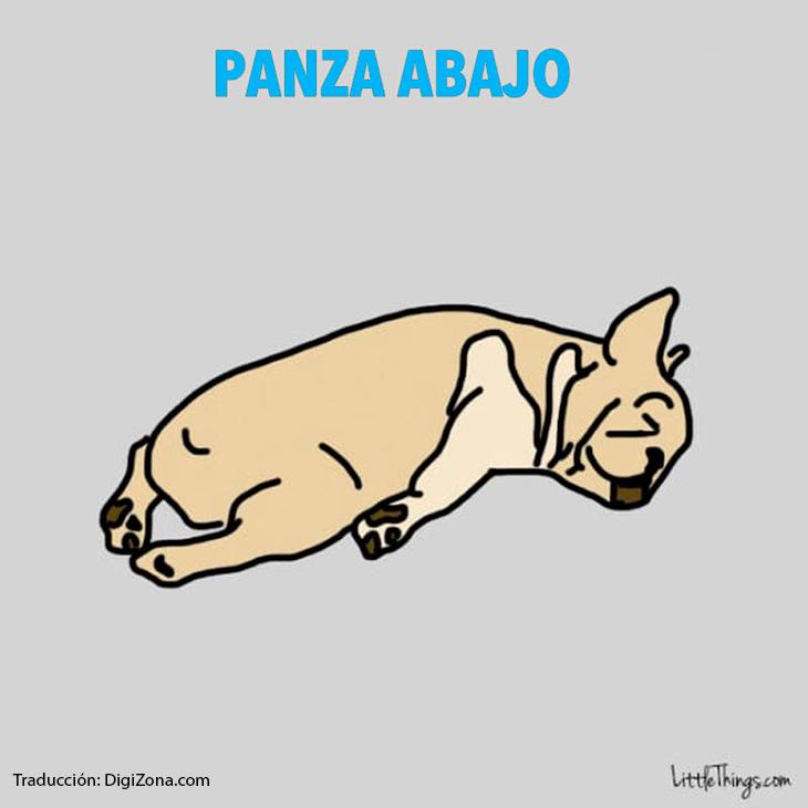 posiciones-en-la-que-duermen-perros-5