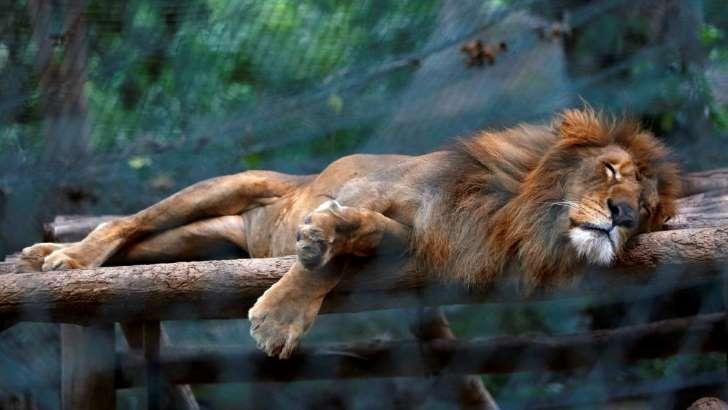 leon-hambre